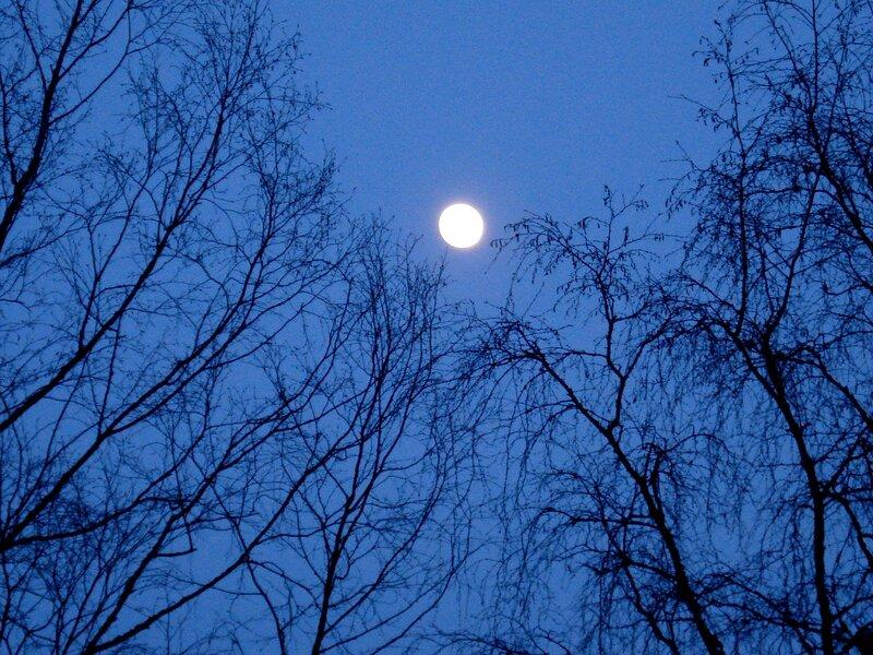 Полная луна среди ветвей