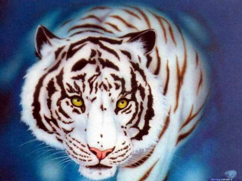 Рисунок тигр белый.