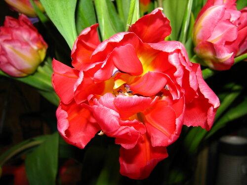 Аленький цветочек.