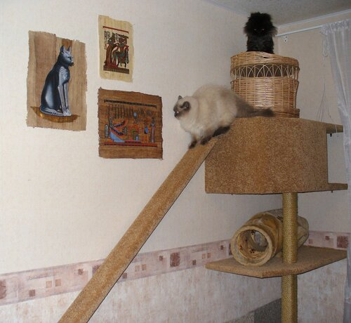 Кошкин дом схема фото