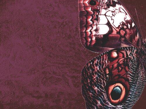 самаркандская штукатурка-профессиональное нанесение OIKOS.VIERO.MONTO.CANDIS.SINIDECO.Terraco.UCIC.NUOVA COPRIK.Baldini Vernici (Венецианская штукатурка)(Марсельский воск)(Римская штукатурка)(жидкие обои)