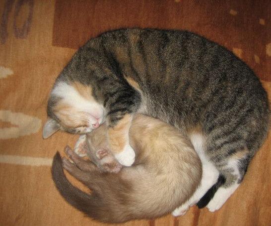 Взаимоотношения с другими животными