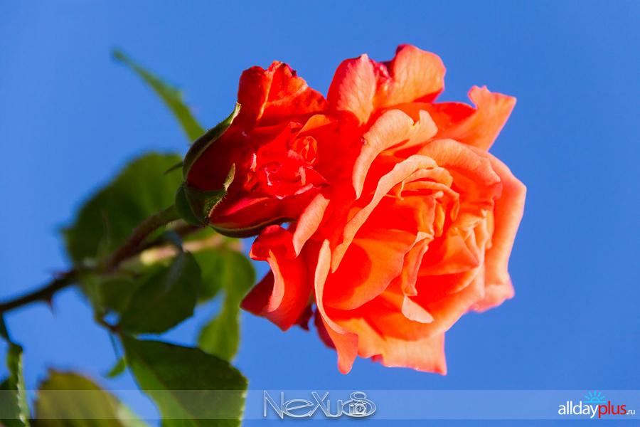 Я люблю все цветы, выпуск 220.