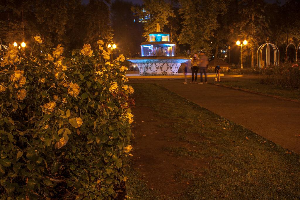 Розарий парка Горького