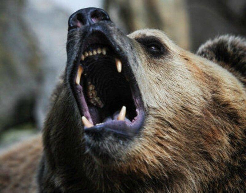 Медведь напал на туристку в окрестностях Сочи