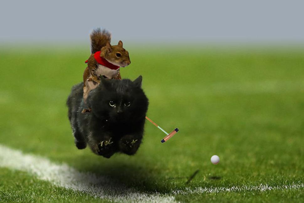 Ничего необычного, белка на коте.
