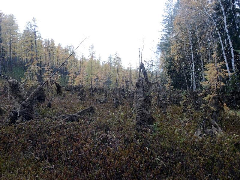 лес призраков1.jpg
