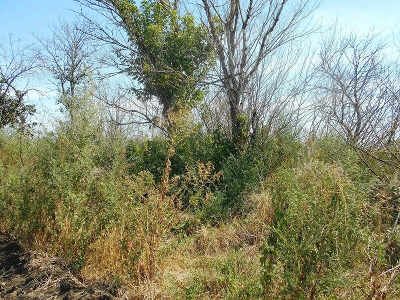 Лесок и травы ... DSCN8325.JPG