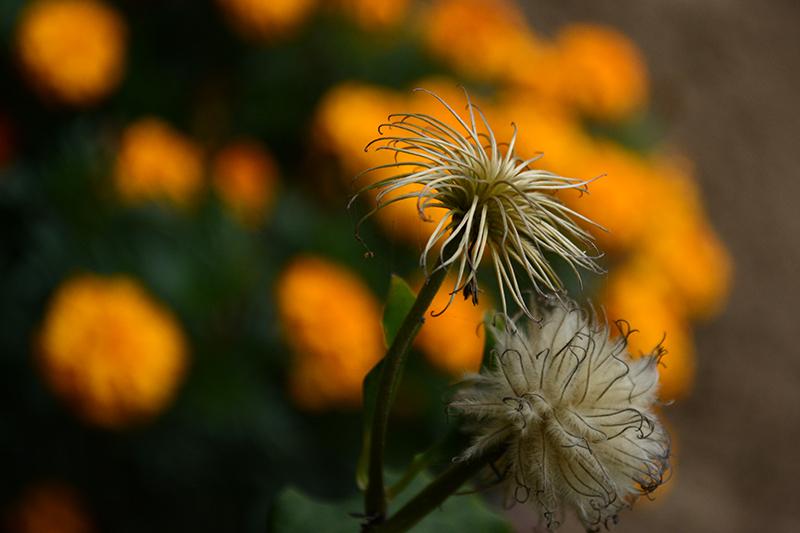 цветы дождливый день 2.jpg