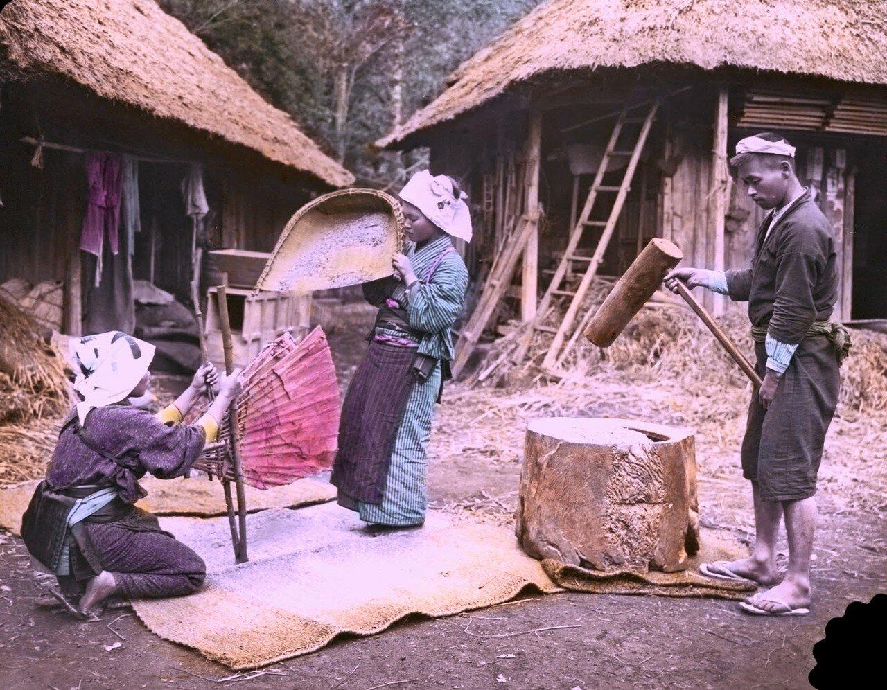 Шелушение риса. 1910