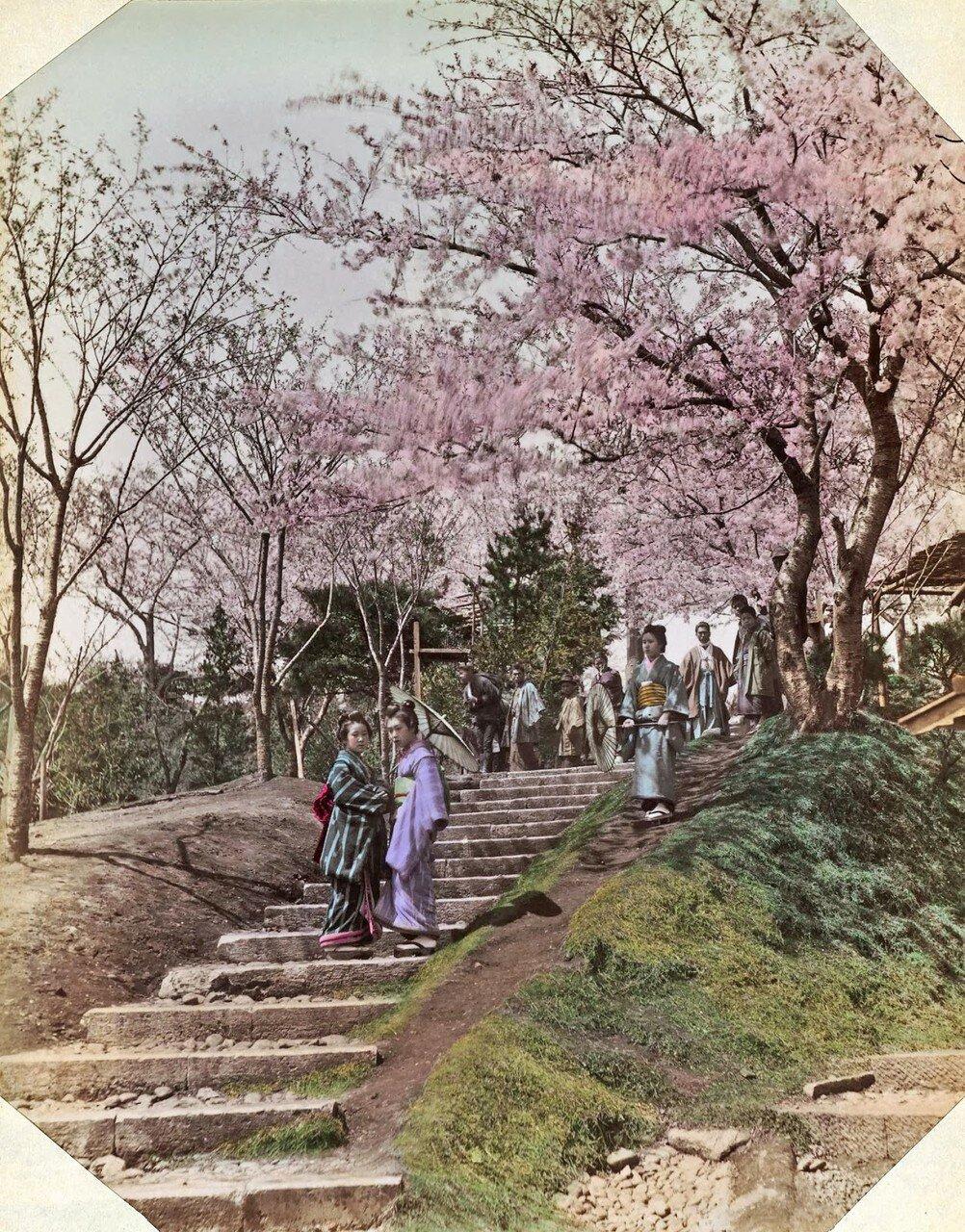 Японки на ступеньках под цветущей вишней. 1890