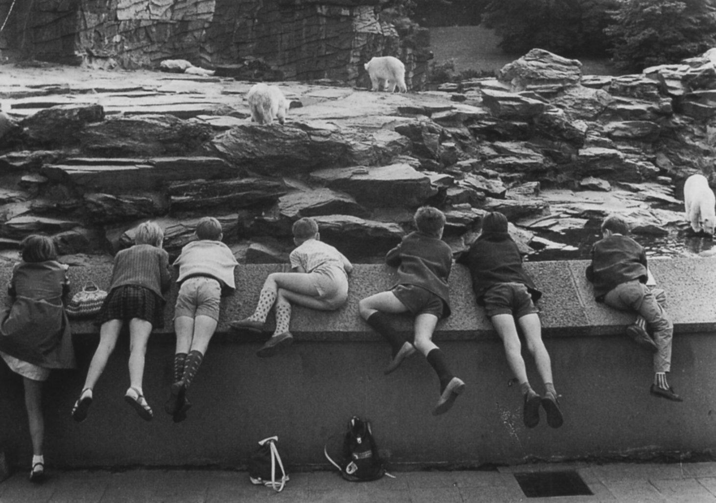 1961. Зоопарк в Восточном Берлине