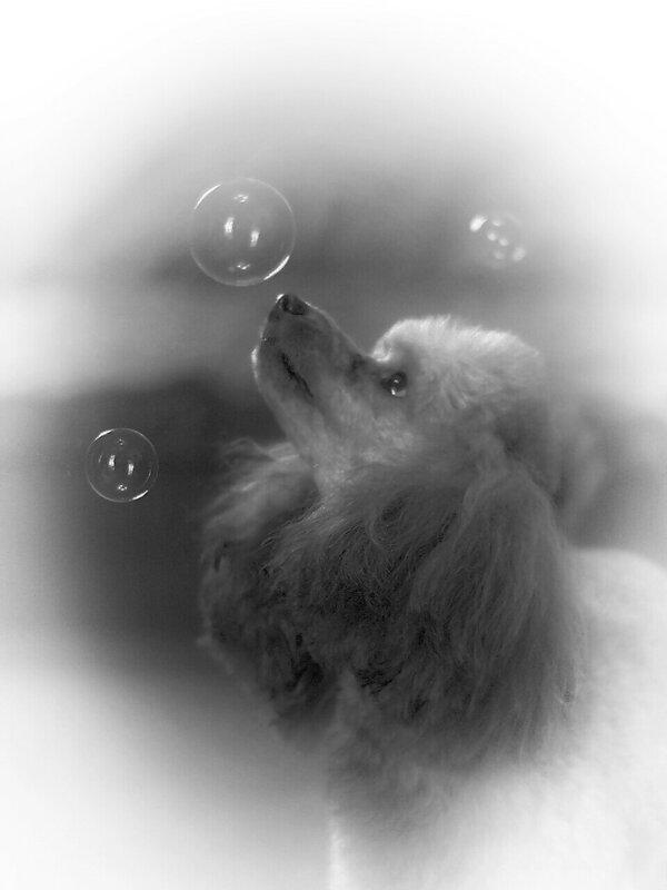 мыльные пузыри  .
