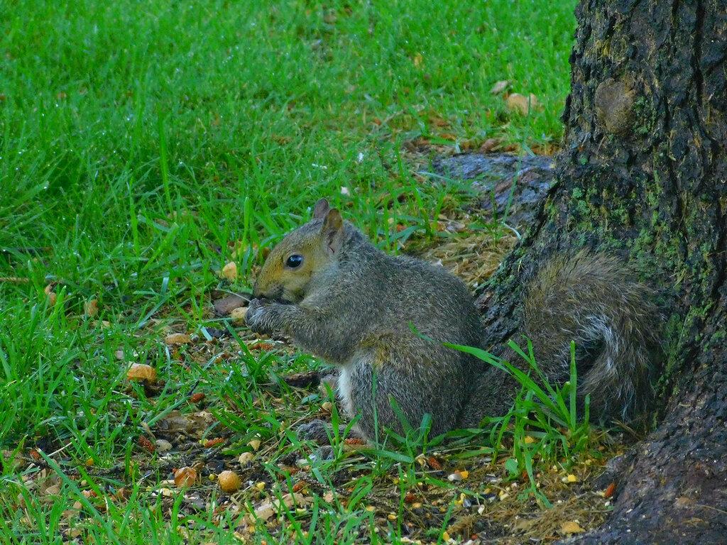 Breakfast  at the yard