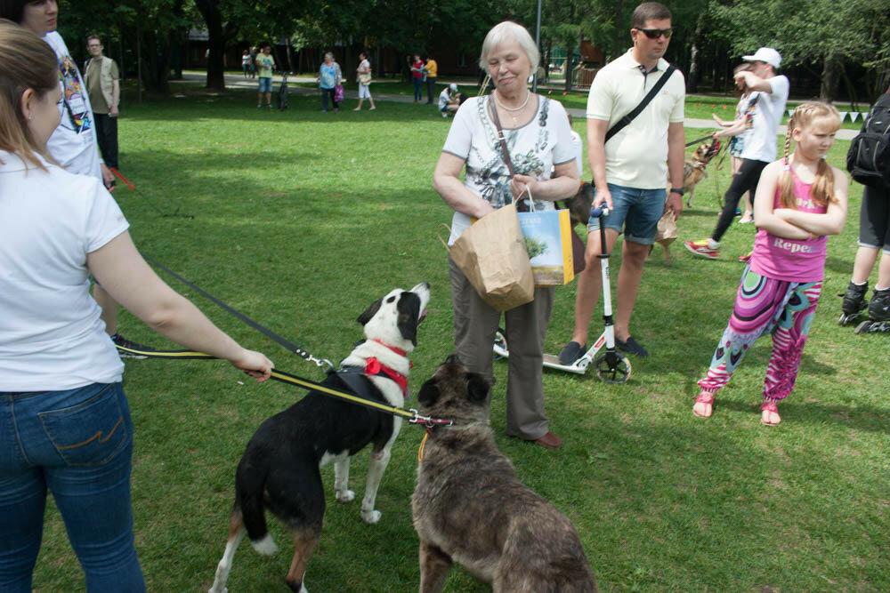 Собаки в парке Кузьминки