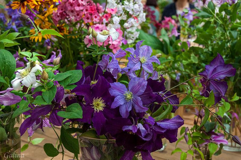 На выставке цветов