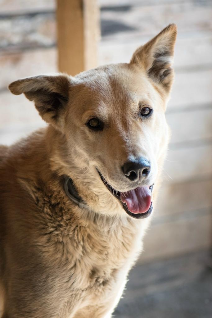 Семейная пара Джоли-Питт собаки из приюта догпорт