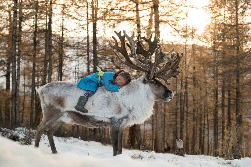 Один из самых юных членов семьи прижимается к оленю.
