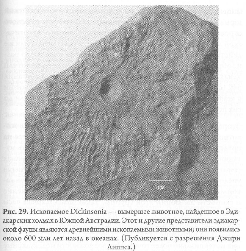 рис 11 – ископаемое в Эдиакарских холмах.jpg