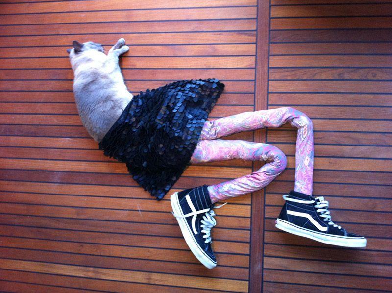 Коты в штанах