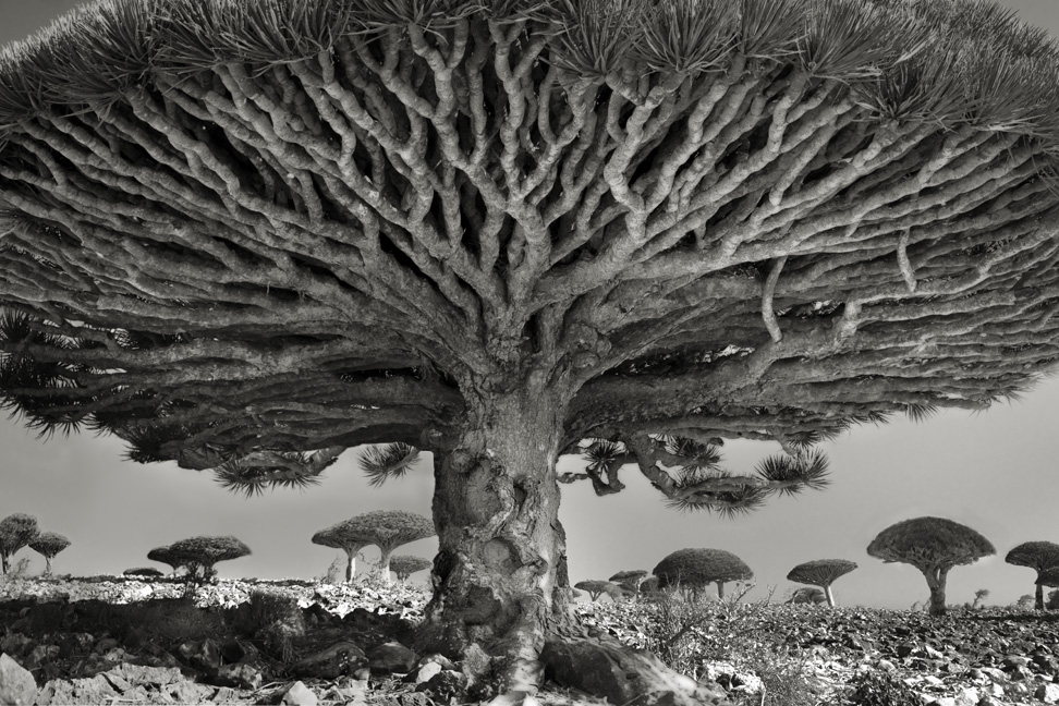 Ancient Trees: Beth Moon's 14-Year Quest to Photograph the World's Most Majestic Trees