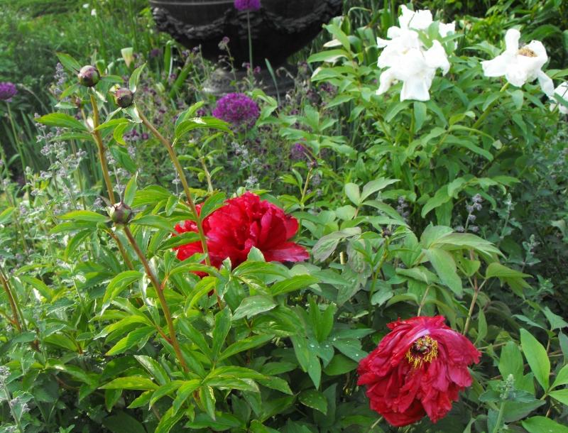 Edward's  Gardens
