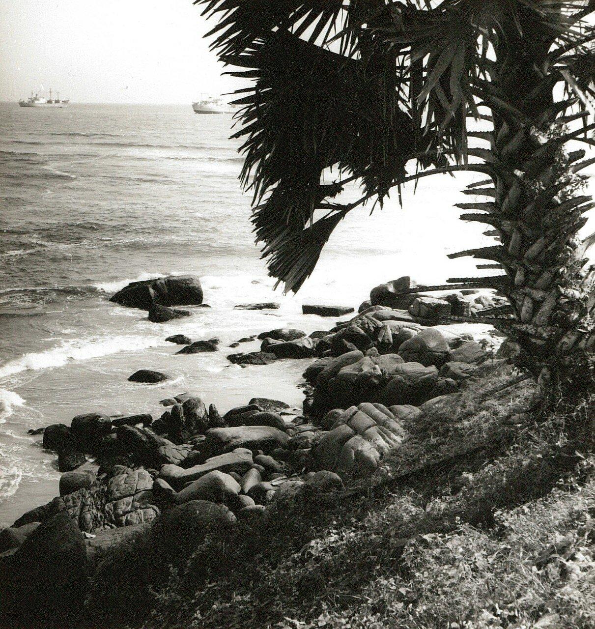 Гвинейский залив. Скалистый берег с пальмами