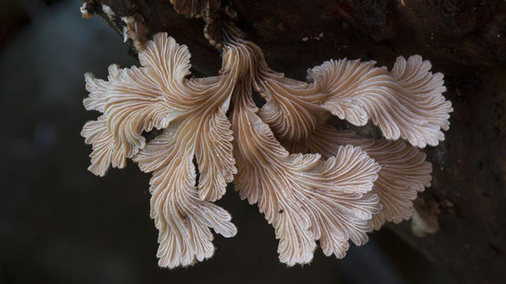 Стив Эксфорд: Красивые фотографии грибов Австралии 0 165cbf 45e7dd9 orig