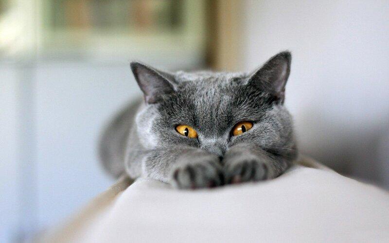 Картинки по запросу Почему кошки мнут лапками?