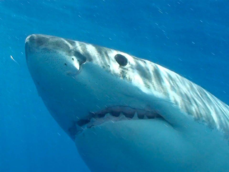 Акулы — 6 смертей в год Нападения на человека довольно редки. В 2014 году было зафиксировано всего т
