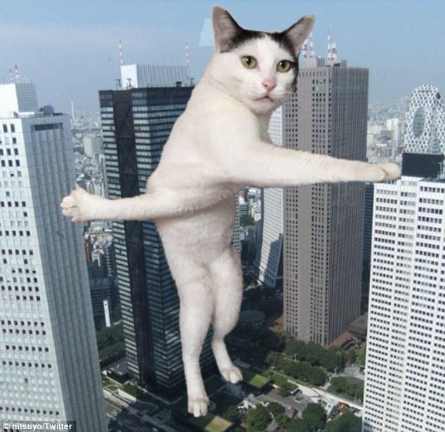 И днем и ночью кот крученый: застрявшая кошка стала героем фотожаб