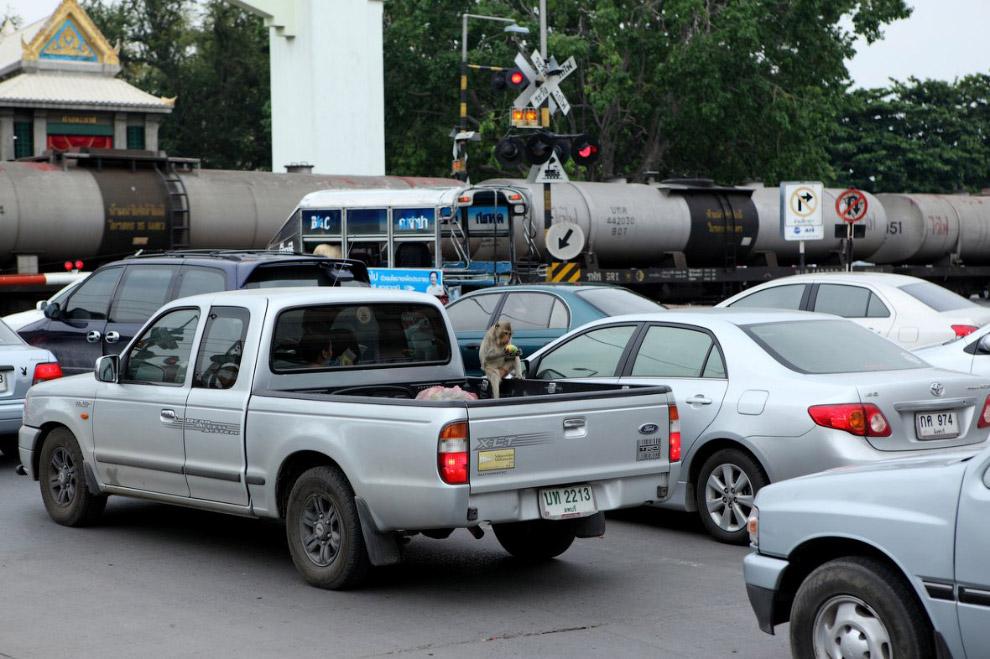 6. Эти сзади уже что-то вытаскивают у туриста из рюкзака. (Фото Chaiwat Subprasom | Reuters):