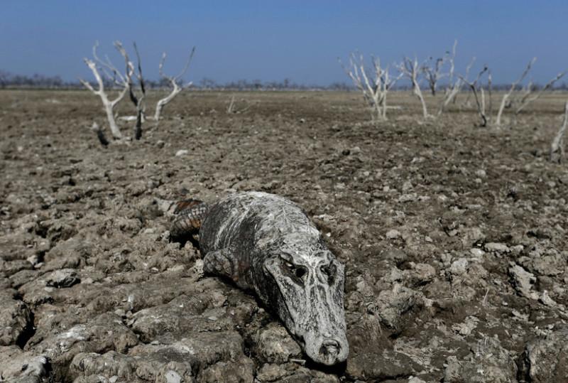 Река смерти: как засуха превратила водоем в кладбище