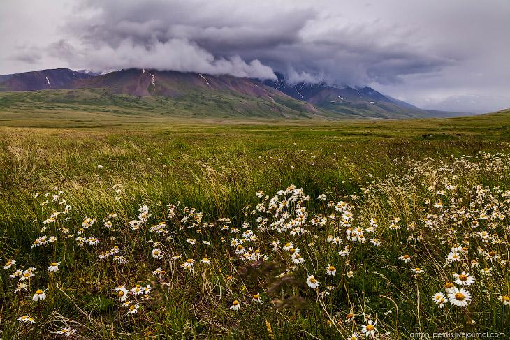 Цветущий Алтай (19 фото)