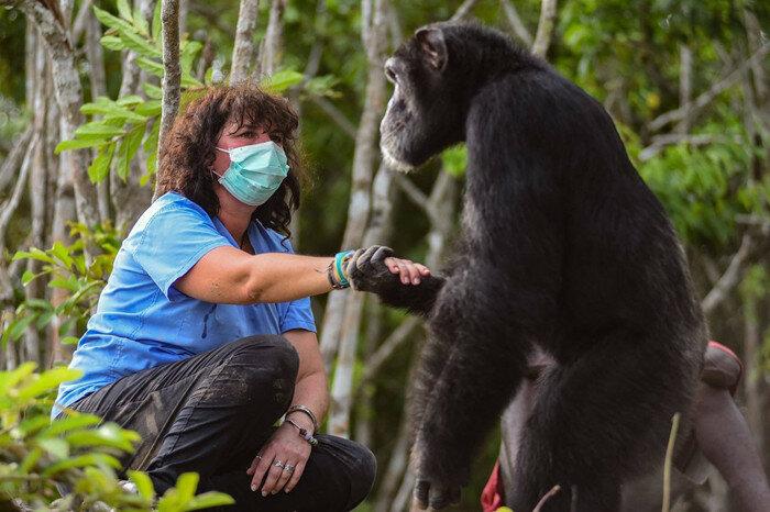 Секс пират горилла