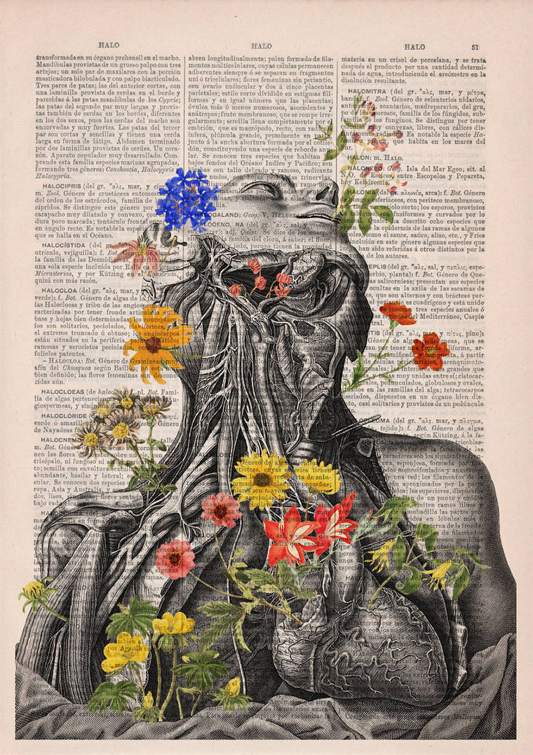 Floral Anatomy - Beautiful poetic illustrations on old book pages