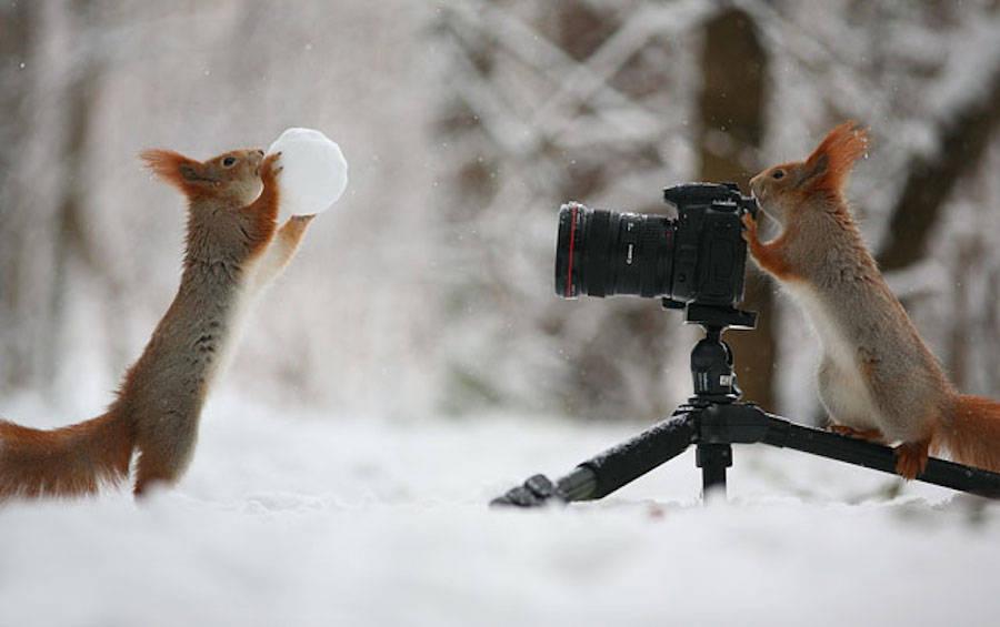 22. Cute Squirrel Photo Shoot .