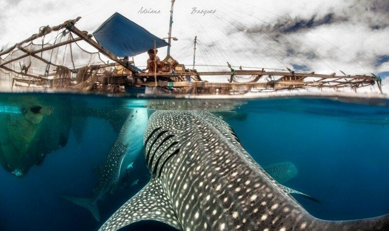 Адриана Баскет: прекрасный мир коралловых рифов
