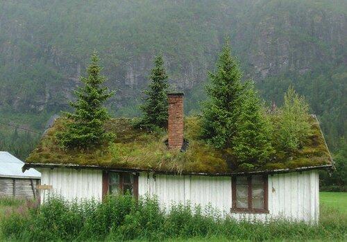 Экодома с зелеными крышами
