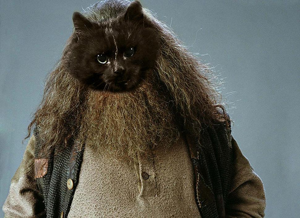 Хагрид-кот.