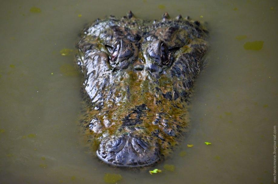 Поэтому если вы видите аллигатора греющегося на солнышке, от него стоит держаться подальше, т.к. это