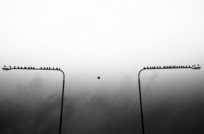 14. Мечущаяся птица