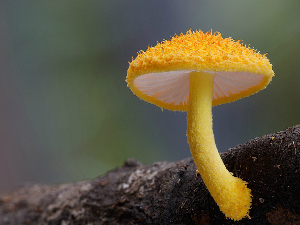 9. Грибы Leratiomyces sp.