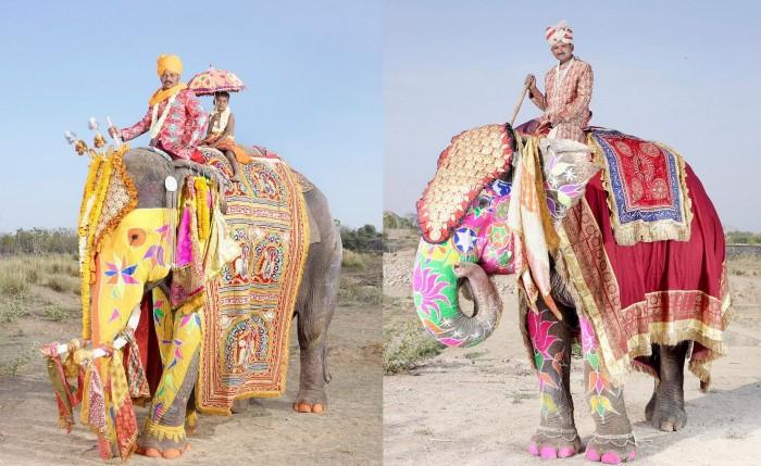 Индийский фестиваль слонов (11 фото)