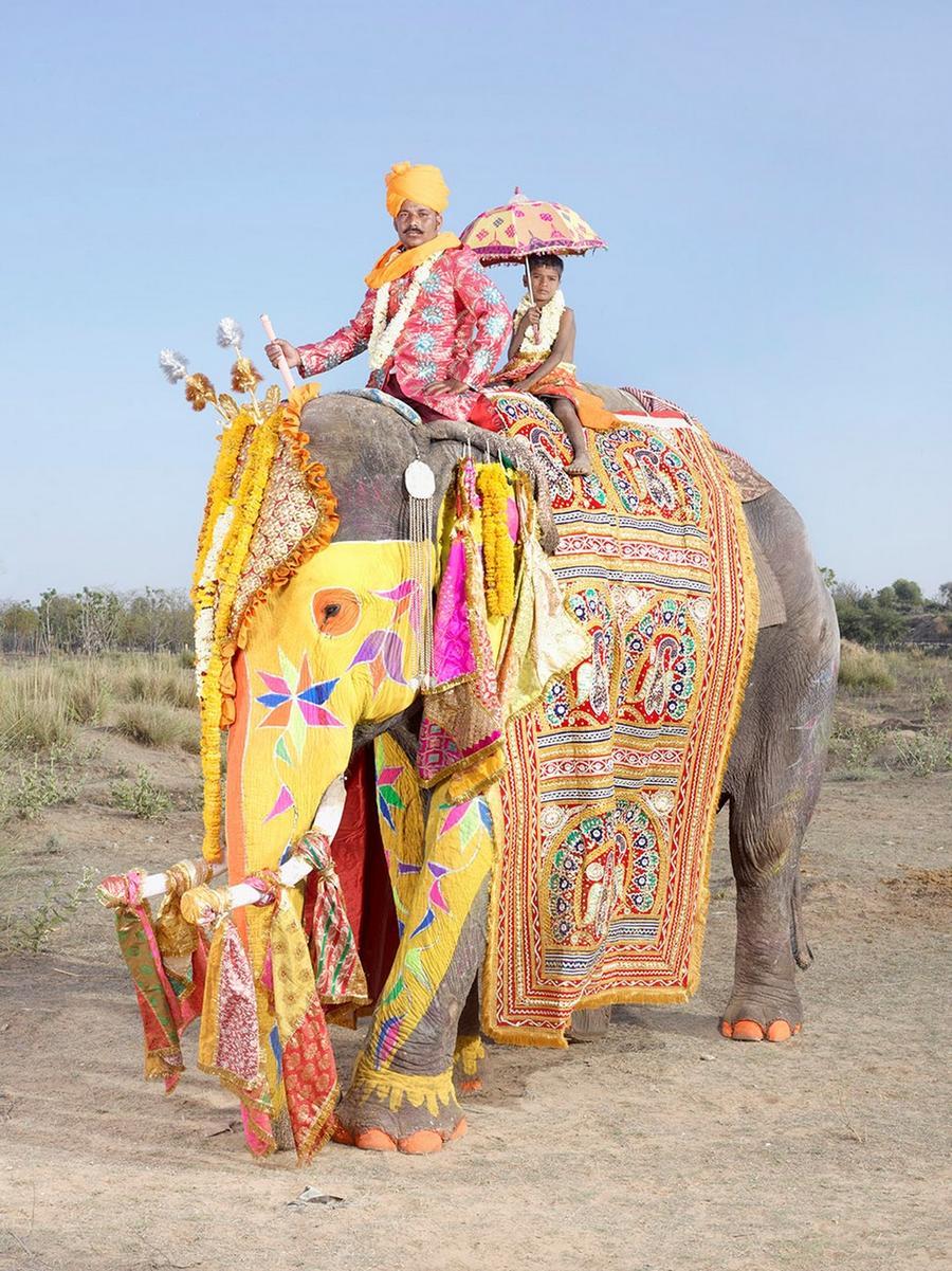 1. После показательного марша слонов проходят соревнования, среди которых самыми зрелищными можно на