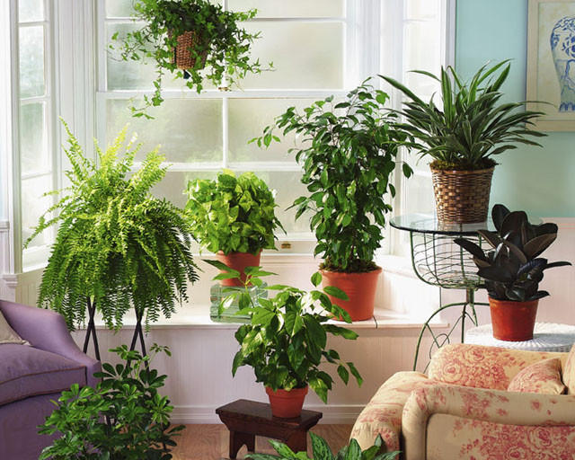 3. Полюбятся растениям Благодаря содержанию в чае полифенолов, он благотворно влияет на состояние ко