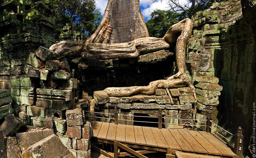Небольшой деревянный мостик, проложенный сквозь стену и проходящий под основанием дерева, позволяет