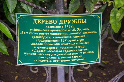 Адлер 2016. Сад Дерева Дружбы