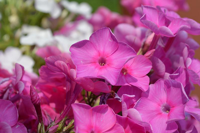 цветочное 7 16.jpg