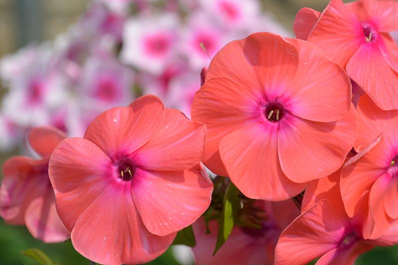 цветочное 10 16.jpg